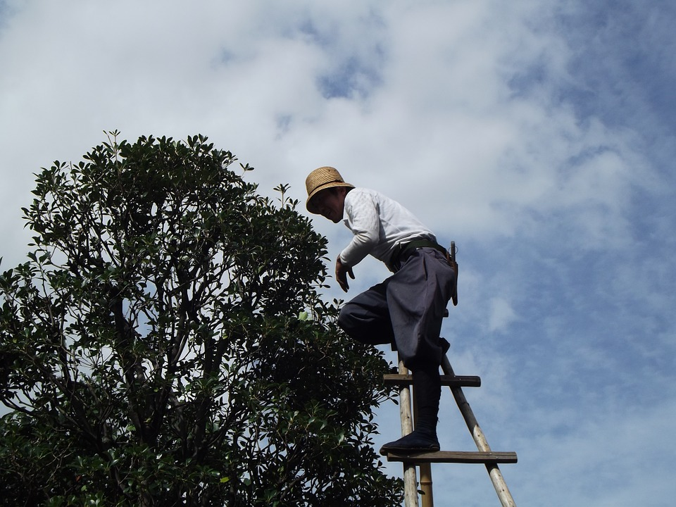 man pruning tree on a ladder