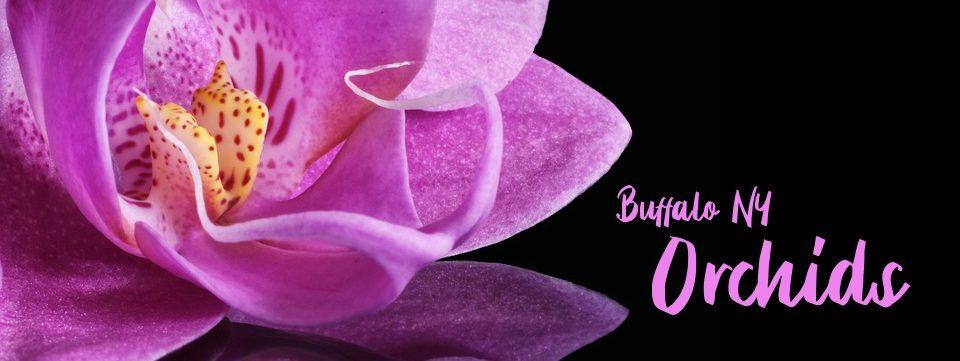 Buffalo NY Orchids