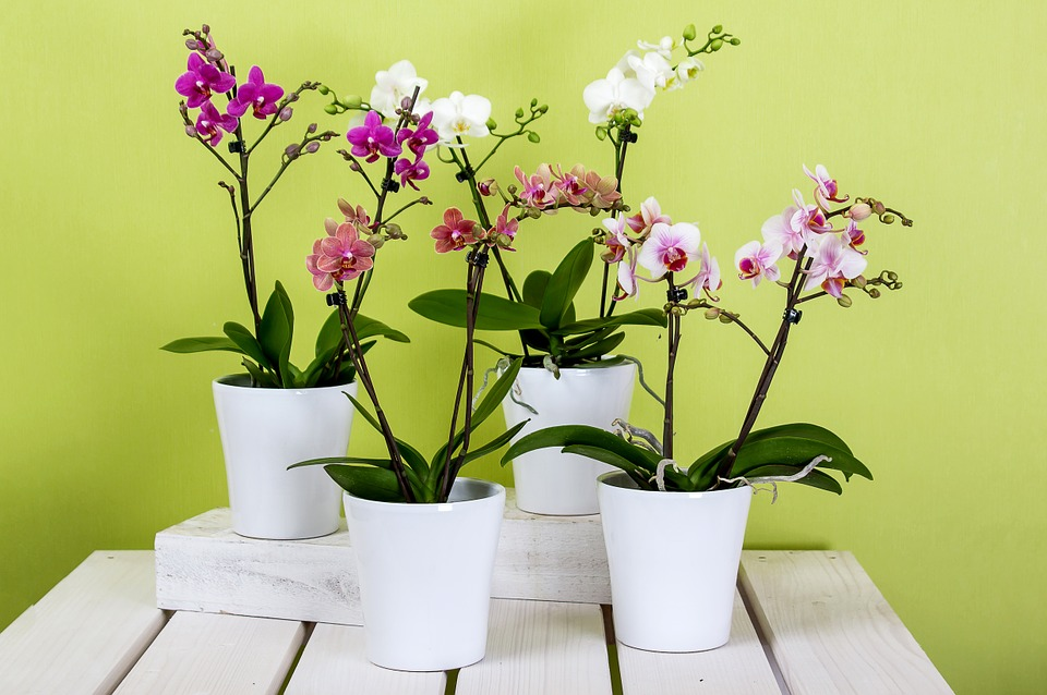 various orchid varieties in pots