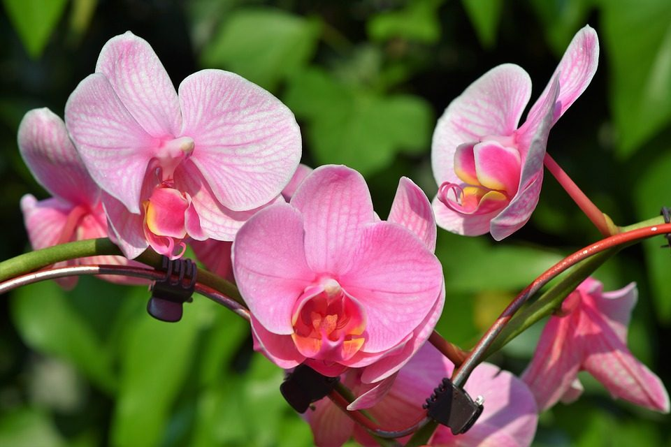 orchids-summer-flowers