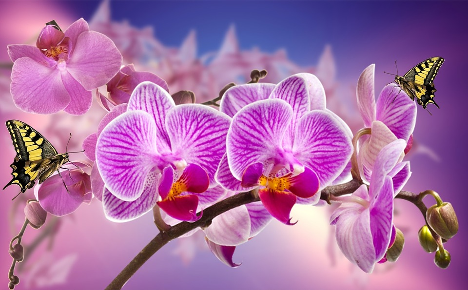 orchids with butterflies on their petals